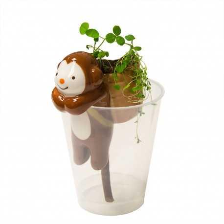 Kit d'horticulture basilic ou fraise sauvage