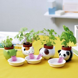 Plantes à faire pousser : menthe