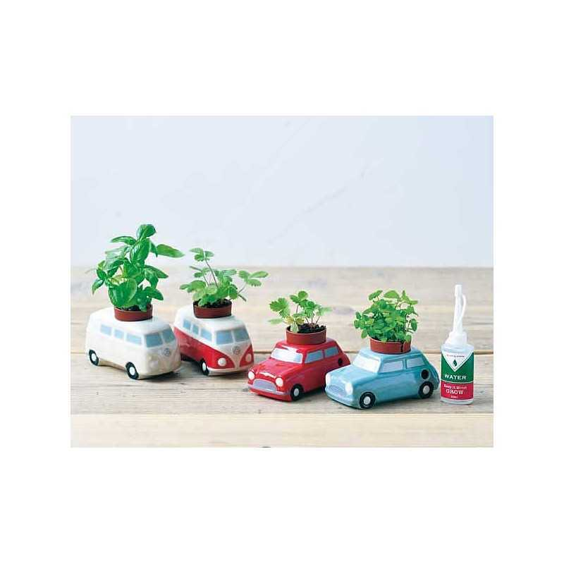 graines de basilic de menthe ou de fraises des bois faire pousser dans la voiture. Black Bedroom Furniture Sets. Home Design Ideas
