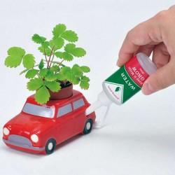 Plan de fraise des bois à faire pousser dans la voiture