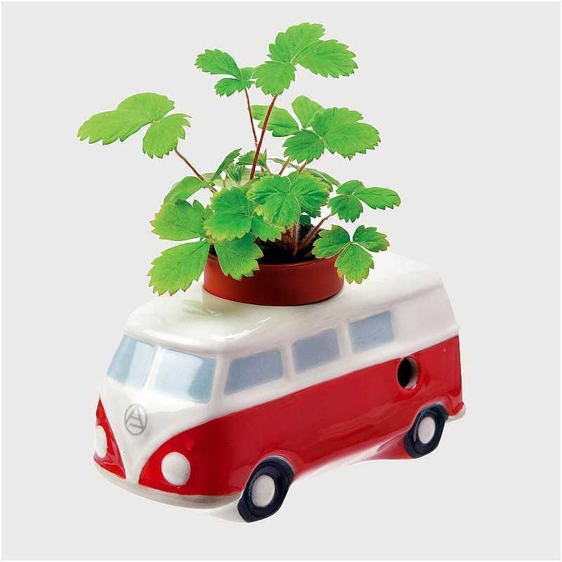 graine de basilic de menthe ou de fraises des bois faire pousser dans la voiture. Black Bedroom Furniture Sets. Home Design Ideas