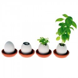 Œuf à la coque pour plant de basilic, de lavande, cactus